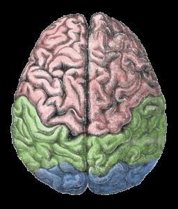 brain porn addiction pleasure center